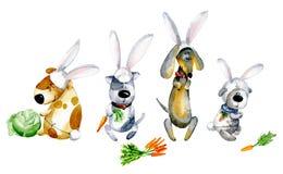 Watercolor cartoon illustration. Set of cute cartoon dogs in bunny costumes. Watercolor cartoon illustration for Christmas. Cute cartoon puppies in bunny Royalty Free Stock Photos