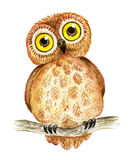 Watercolor cartoon owl Stock Image