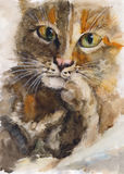 Watercolor cat portrait Royalty Free Stock Image