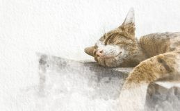 Watercolor cat sleeping on floor with abstract color on white paper background. Painting of beautiful artwork. royalty free illustration