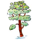 Watercolor cedar tree light green cartoon figure Royalty Free Stock Photo