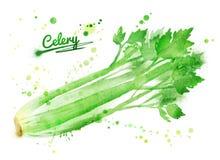 Watercolor celery Stock Image