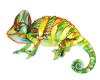 Watercolor chameleon Stock Photography