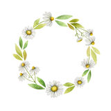 Watercolor chamomile round frame of flowers and leaves on a white background. Royalty Free Stock Photography