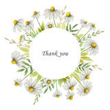 Watercolor chamomile round frame of flowers and leaves on a white background. Royalty Free Stock Image