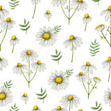 Watercolor chamomile seamless pattern of flowers and leaves isolated on white background. Illustration for design of health care products, natural cosmetics Stock Image