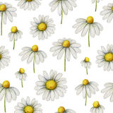 Watercolor chamomile seamless pattern of flowers and leaves isolated on white background. Illustration for design of health care products, natural cosmetics Stock Images