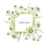 Watercolor chamomile square frame of flowers and leaves on a white background. Stock Image