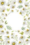 Watercolor chamomile vertical rectangular frame. Stock Photo