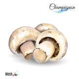 Watercolor champignon Stock Image