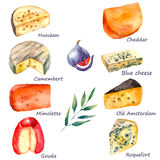 Watercolor cheese set. Cheese making various types of cheese set of watercolor illustration on a white background with green twig and figs. Vector Stock Images