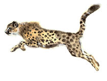 Watercolor cheetah. Beautiful cheetah. Watercolor cheetah. Watercolor wild cat. Watercolor wild animals. Watercolor animals. Watercolor pets. Watercolor cheetah Royalty Free Stock Photos
