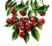 Watercolor cherries. Watercolor painting, still life, cherries on a light background Royalty Free Stock Photo
