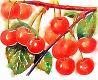 Watercolor cherries illustration painting design. A bunch of red watercolor cherries illustrated and painted in watercolor Stock Image
