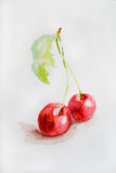 Watercolor cherry. Watercolor illustration with red cherry Royalty Free Stock Photography