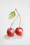 Watercolor cherry Stock Images