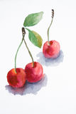 Watercolor cherry. Watercolor illustration of red cherry Royalty Free Stock Images