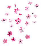 Watercolor cherry blossom royalty free illustration