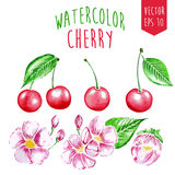 Watercolor cherry elements Royalty Free Stock Photo