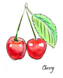 Watercolor cherry Royalty Free Stock Image