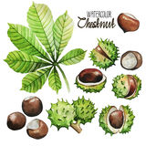 Watercolor chestnut collection Stock Photography