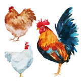 Watercolor chicken Royalty Free Stock Photography