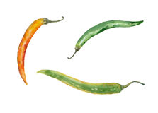 Watercolor chile peppers. Watercolor painting. Chile peppers on white background Royalty Free Stock Image