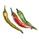 A set of three watercolour chili peppers isolated on a white background Stock Photos