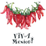 Watercolor chilli. Chilli. Hand drawn watercolor painting on white background. Vector illustration Stock Photography