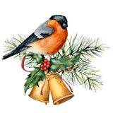 Watercolor Christmas card with bullfinch and holiday design. Hand painted bird with bells, holly, red bow, berries, fir. Branch isolated on white background stock illustration