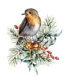 Watercolor Christmas card with robin, bells and winter design. Hand painted bird with eucalyptus leaves, golden bells. Fir branch and barberry isolated on stock photos
