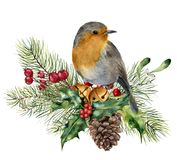 Watercolor Christmas composition with bird. Hand painted robin with fir and berry branch, mistletoe, holly, pine cone. And bells isolated on white background vector illustration