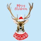 Watercolor christmas deer Royalty Free Stock Photos