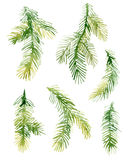 Watercolor Christmas fir-needle tree branches Royalty Free Stock Photos