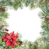 Watercolor Christmas floral frame with poinsettia. Hand painted Christmas tree branch, pine cone, poinsettia, holly. Mistletoe and barry isolated on white Stock Photography