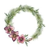 Watercolor Christmas floral wreath with hellebore flowers. Hand painted Christmas tree branch, cedar and hellebore with Royalty Free Stock Photos