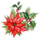 Watercolor christmas flowers vector illustration