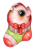 Watercolor Christmas red sock with a little cute piggy vector illustration