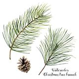 Watercolor Christmas tree branch set. Hand painted Christmas fir branch with cone isolated on white background Royalty Free Stock Image