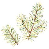Watercolor Christmas tree branches. Hand painted texture with fir-needle natural elements isolated on white background. Watercolor Christmas tree branches. Hand Royalty Free Stock Images
