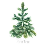 Watercolor christmas tree. Royalty Free Stock Photography