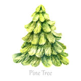 Watercolor christmas tree. Stock Images