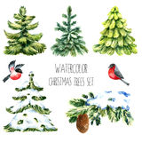 Watercolor christmas trees. Isolated pine tree, winter branch, bullfinches illustrations. Vector vector illustration