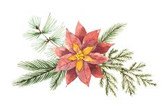 Watercolor Christmas vector bouquet with flower poinsettias and fir branches. Stock Photos