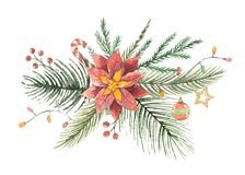 Watercolor Christmas vector bouquet with flower poinsettias and fir branches. Royalty Free Stock Image
