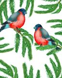 Watercolor. Christmas wreath with fir branches with two bullfinches. stock illustration