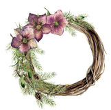 Watercolor christmas wreath with hellebore flower. New year tree and wood branch wreath with mistletoe and christmas Royalty Free Stock Photos
