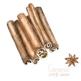Watercolor cinnamon and anise. Hand draw cinnamon illustration. Herbs vector object isolated on white background. Kitchen herbs and spices banner Royalty Free Stock Images