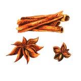 Watercolor cinnamon Royalty Free Stock Photo