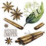 Watercolor cinnamon set. On white background. Natural spices Stock Photos